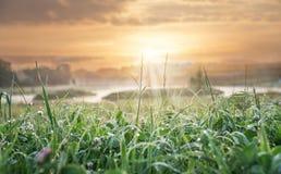 Blad av gras i soluppgångpanelljuset Trevlig bakgrund, lågt djup av fältet Royaltyfri Foto