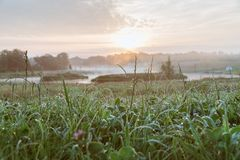 Blad av gras i soluppgångpanelljuset Trevlig bakgrund, lågt djup av fältet royaltyfri bild