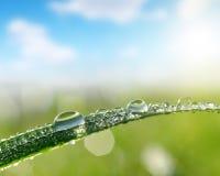 Blad av gräs med closeupen för daggdroppar Arkivbild