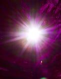 Blad av lindträdet som glöder i solljus Arkivfoto