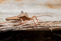 Blad-betaald Insect royalty-vrije stock fotografie