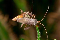Blad-betaald Insect stock afbeeldingen