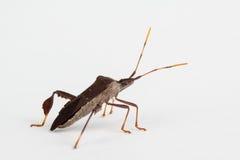 Blad-betaald insect dicht omhoog royalty-vrije stock afbeeldingen