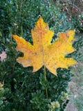 Blad bij botanische tuin - Macea, Arad-provincie, Roemenië royalty-vrije stock foto's