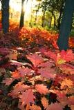 Blad bij de Herfst royalty-vrije stock afbeelding