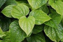 Blad, bladeren, groen geïsoleerde illustratie, royalty-vrije stock afbeeldingen