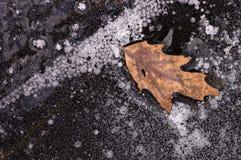 Blad dat in ijs wordt bevroren Stock Foto