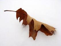 Blad in de sneeuw Stock Afbeelding