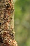 Blad-de steel verwijderde van gekko royalty-vrije stock fotografie