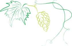 Blad, druif en de spruiten vector illustratie