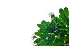 Blad en bloemachtergrond Royalty-vrije Stock Afbeelding