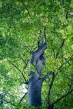 Blad en boom op witte achtergrond wordt geïsoleerd die royalty-vrije stock foto's