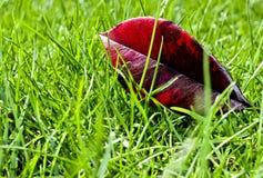 Blad en gras Stock Afbeeldingen