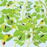 Blad en insecten. royalty-vrije illustratie
