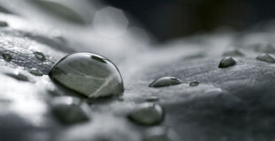 Blad en regendruppels Stock Foto