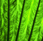 blad en zijn adersb macro dichte omhooggaand Stock Afbeelding