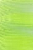 Blad för banan för abstrakt texturbakgrund nytt Arkivbilder