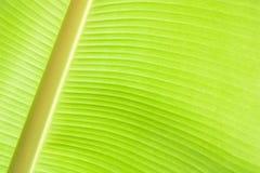 Blad för banan för abstrakt texturbakgrund nytt Royaltyfria Foton