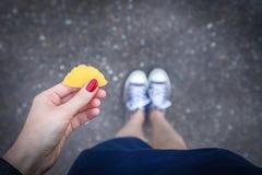 Blad för biloba för ginkgo för guling för innehav för hand för kvinna` s på en grå bakgrund royaltyfri foto