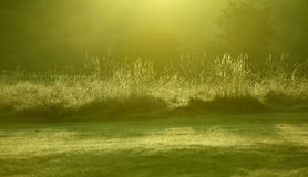 Blad för Closeupmorgongräs, Dawn Winter Sun Royaltyfria Foton