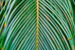 Blad för gräsplan för ormbunke för tappningfoto tropiskt på mörker - grön bakgrund för tryckdesign r royaltyfria bilder