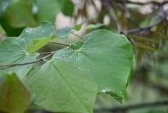 Blad för grön växt med fuktighet och dagg arkivfoto