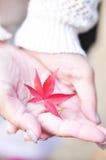 Blad för röd lönn i hand Royaltyfri Foto