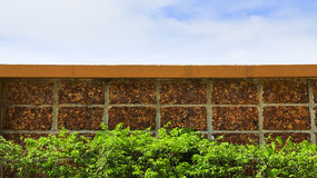 Blad för tegelstenvägg och gräsplanoch blå himmel royaltyfria bilder