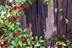 Blad för trädskäll och gräsplan Royaltyfria Foton