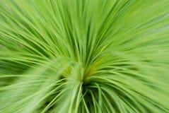 Blad gras Stock Afbeelding