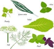 Blad groene groenten, biologisch product voor vegetarisch dieet royalty-vrije illustratie