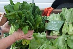 Blad Groene Veggies voor Verkoop bij de Markt van de Landbouwer Royalty-vrije Stock Fotografie