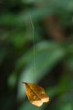 Blad het hangen door spinneweb Stock Afbeeldingen