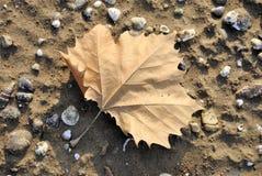 Blad in het zand Stock Foto