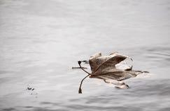 Blad i en sjö Royaltyfria Foton