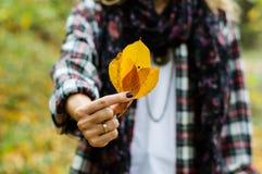 blad i hand Arkivfoton
