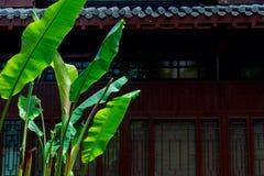 Blad-klassiska trädgårdar för banan av Suzhou Royaltyfri Foto