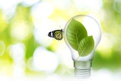 Blad in Lamp 02 stock foto
