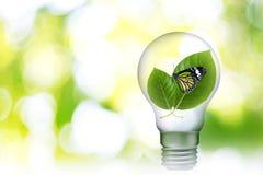 Blad in Lamp 04 stock foto