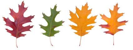 blad mångfärgat Arkivfoto
