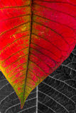 blad makroen Royaltyfria Foton