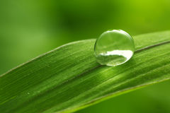 Blad med regnsmå droppar - materielbild Arkivbild