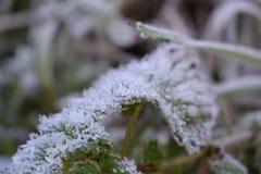 Blad med spetsig frost Arkivbild