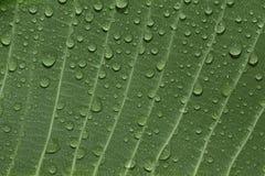 Blad met dalingen van water Royalty-vrije Stock Foto's