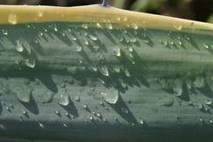 Blad met Waterdalingen Stock Foto