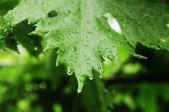 Blad met regendalingen Royalty-vrije Stock Afbeelding