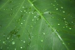 Blad met regendalingen stock foto's