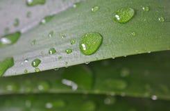 Blad met regendruppeltjes Stock Afbeeldingen