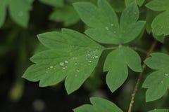 Blad met regendruppeltjes Royalty-vrije Stock Foto's