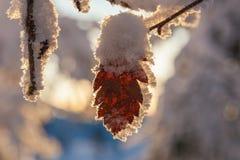 Blad met vorst en sneeuw Stock Foto's